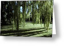 A Weeping Willow Casts Long, Cool Greeting Card