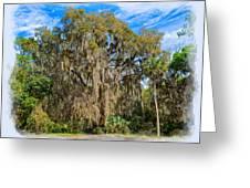 A Well Dressed Oak Greeting Card