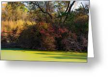 A Wetland Display Greeting Card