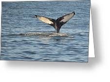 A Whale Of A Tail Bar Harbor Greeting Card
