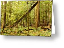 A Whisper In The Rainforest Greeting Card