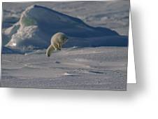 A White Arctic Fox, Alopex Lagopus Greeting Card