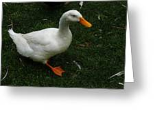 A White Duck Greeting Card