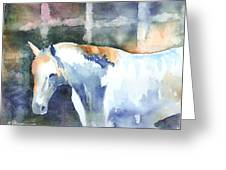 A White Horse Greeting Card