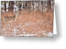 A White-tailed Deer In A Snow Storm Greeting Card
