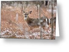 A White-tailed Deer In The Snow Greeting Card