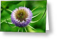 A Wild And Prickly Teasel Greeting Card