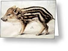 A Wild Boar Piglet Greeting Card