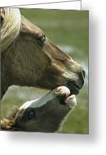 A Wild Pony Foal Nuzzling Its Mother Greeting Card