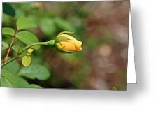 A Wilder Rose Greeting Card