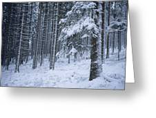 A Winter View Of The Greeting Card by Taylor S. Kennedy