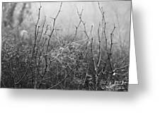 A Winter Web Greeting Card