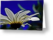 A Worms Eye View Of A Daisy Greeting Card
