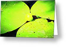 A Yellow Bud Of Waterlily Greeting Card