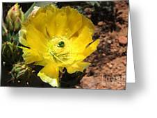 A Yellow Cactus Blossom Greeting Card
