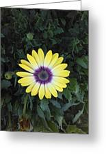 A Yellow Daisy Exhibit Greeting Card