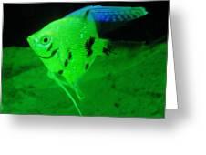 A Yellow Fish  Greeting Card