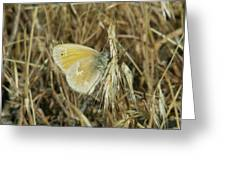 A Yellow Moth  Greeting Card