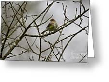 A Yellow-rumped Warbler In The Evening Greeting Card