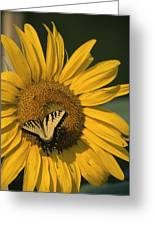 A Yellow Swallowtail Greeting Card
