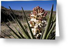 A Yucca Plant Blossoms In The Desert Greeting Card