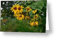 A Bit Ragged, Their Yellow Glory Greeting Card