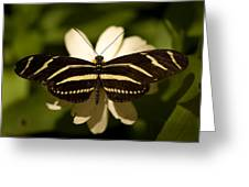 A Zebra-winged Butterfly At The Lincoln Greeting Card by Joel Sartore