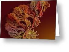 a051 Multilegged Tree Greeting Card