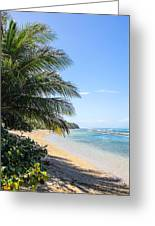 Ababora Palms Greeting Card