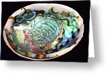Abalone Seashell Greeting Card