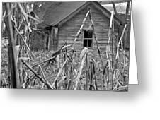 Abandoned Farmhouse Through Cornfield Greeting Card