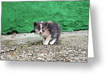 Abandoned Kitten On The Street Greeting Card
