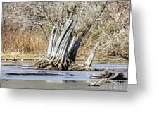 Aboriginal Stumps Greeting Card