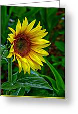About Face And Stand Tall Greeting Card