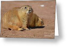 Absolutely Adorable Prairie Dog With  A Friend Greeting Card