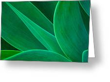 Abstract Agave Plant Greeting Card
