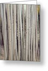 Abstract Aspen Tree Trunks Greeting Card
