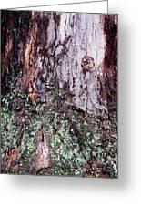 Abstract Bark 11 Greeting Card