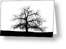 Abstract Bw Single Tree Greeting Card