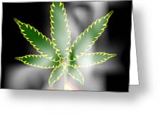 Abstract Cannabis Background Greeting Card