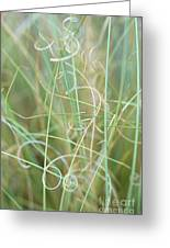 Abstract Curly Grass One Greeting Card