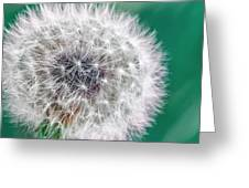 Abstract Dandy Lion - Teal Greeting Card