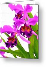 Abstract Iris Greeting Card