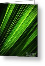 Abstract Of Green Leaf Of Exotic Palm Tree Greeting Card