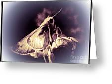 Abstract Of Skipper Butterfly Greeting Card