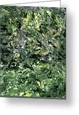 Abstract Petals Greeting Card