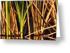 Abstract Reeds Triptych Top Greeting Card