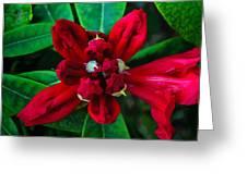Abstract Rhoddy Bloom Greeting Card
