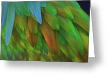 Abstractions From Nature - Pigeon Feathers Greeting Card