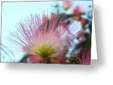 Acacia Bloom Greeting Card